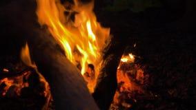 Hoguera 2 hoguera Primer de las llamas que queman en el fondo negro, c?mara lenta almacen de video
