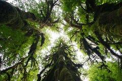 森林hoh雨状态华盛顿 库存图片