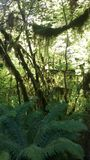Hoh National Rainforest Fotografía de archivo libre de regalías