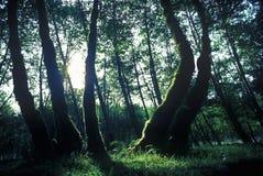 HOH obywatela Pierwszy Waszyngtońskiego lasu tropikalnego Olimpijski półwysep, WA obrazy royalty free