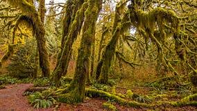 Hoh Rain Forest Fotografia Stock