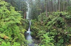 Hoh Rain Forest Imagens de Stock