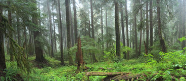 Hoh Rain Forest Photos libres de droits