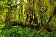 Hoh Rain Forest Fotografie Stock