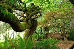 Hoh Rain Forest Arkivbilder