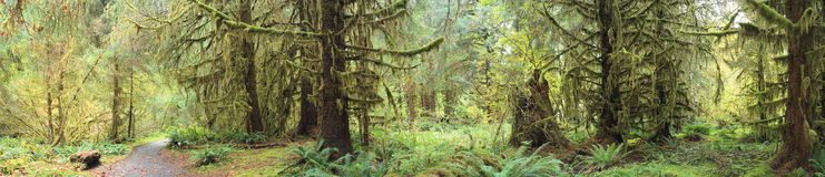 Hoh Rain Forest. In Olympic National Park Washington Royalty Free Stock Photo