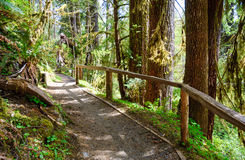 Hoh Rain Forest, Olympic National Park Royalty Free Stock Photo