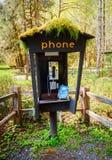 Hoh Rain Forest, Olympic National Park Royalty Free Stock Photos