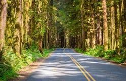 Hoh Rain Forest, Olympic National Park Stock Photos