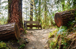 Hoh Rain Forest, Olympic National Park Royalty Free Stock Photography