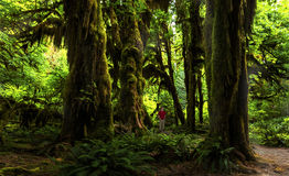 Hoh Rain Forest Stock Photography