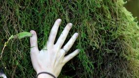Hoh Rain Forest, parco nazionale olimpico, WASHINGTON U.S.A. - ottobre 2014: coverd degli alberi con muschio con una mano Fotografia Stock