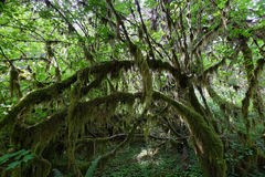Hoh rain Forest Royalty Free Stock Photos