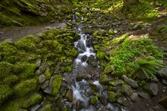 Hoh Rainforest Creek Royalty Free Stock Photos