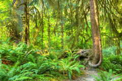Hoh Rainforest Stock Photography