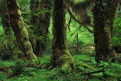 Olympic National Park, USA royalty free stock photography