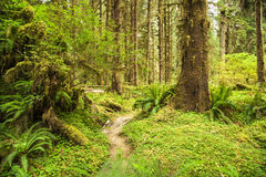 Hoh Rainforest Stock Photos