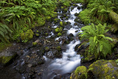 Hoh Rainforest stream Stock Photo