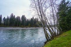Hoh River en Hoh Rain Forest en Washington - BIFURCACIONES - WASHINGTON Imagen de archivo