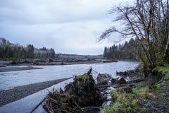 Hoh River en la selva tropical de la península olímpica Washington - BIFURCACIONES - WASHINGTON Imagen de archivo libre de regalías