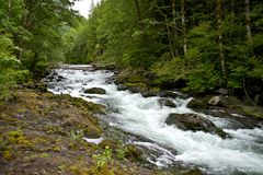 Hoh River Forest Creek Royalty Free Stock Photography