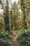 Hoh. A shot of a path in the Hoh rainforest on the Olympic peninsula, Washington Stock Photo