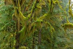 Hoh tropikalnego lasu deszczowego widok Zdjęcia Stock