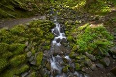 Hoh tropikalny las deszczowy zatoczka Zdjęcia Royalty Free