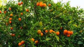 Hohe Abbildung der Auflösung 3D getrennt auf Weiß Frucht des Gartenlebensmittels Lizenzfreies Stockfoto