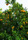 Hohe Abbildung der Auflösung 3D getrennt auf Weiß Frucht des Gartenlebensmittels Lizenzfreie Stockfotos