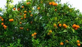 Hohe Abbildung der Auflösung 3D getrennt auf Weiß Frucht des Gartentapetenlebensmittels Lizenzfreie Stockbilder