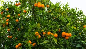 Hohe Abbildung der Auflösung 3D getrennt auf Weiß Frucht des Gartentapetenlebensmittels Lizenzfreie Stockfotos
