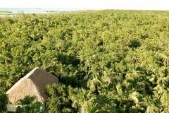 Hohe Ansicht des mexikanischen Dschungels Stockfotografie