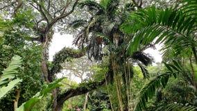 Hohe Ansicht für einen Wald stockfotografie