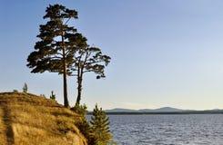 Hohe ausgebreitete Kiefer, die auf der steilen Klippe am Irtyash See in Süd-Urals, Russland steht Stockbild