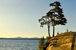 Hohe ausgebreitete Kiefer, die auf der steilen Klippe am Irtyash See in Süd-Urals, Russland steht Lizenzfreies Stockfoto