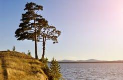 Hohe ausgebreitete Kiefer, die auf der steilen Klippe am Irtyash See in Süd-Urals, Russland steht Lizenzfreie Stockbilder