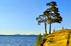Hohe ausgebreitete Kiefer, die auf der steilen Klippe am Irtyash See in Süd-Urals, Russland steht Stockfotografie