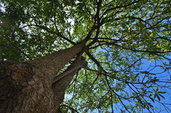 Hohe Bäume. stockfotos