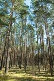Hohe Bäume Lizenzfreie Stockfotos