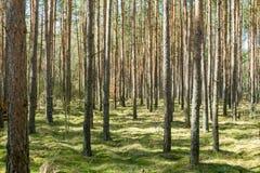 Hohe Bäume Stockfotografie