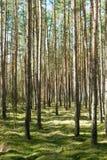 Hohe Bäume Lizenzfreie Stockbilder