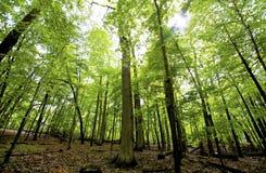 Hohe Bäume Stockbild