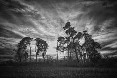 Hohe Bäume Lizenzfreies Stockfoto
