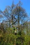 Hohe Bäume, die für den Himmel erreichen Lizenzfreie Stockbilder