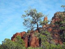 Hohe Bäume, felsige Helme lizenzfreie stockfotos