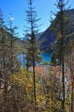 Hohe Bäume mit Berg und See bei Jiuzhaigou Lizenzfreies Stockfoto
