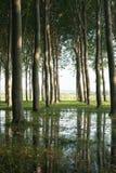 Hohe Bäume werden im Wasser reflektiert, das unter ihnen vereinigt wird Lizenzfreie Stockbilder