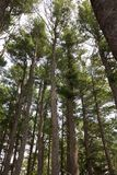 Hohe Bäume, die über der Bahn durchläuft das Holz stehen Lizenzfreie Stockfotografie