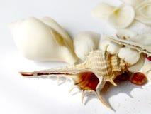 Hohe der Taste Lebensdauer noch der Shells lizenzfreies stockbild